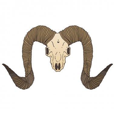 Ram skull isolated vector illustration.