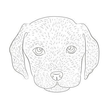 Puppy of a labrador
