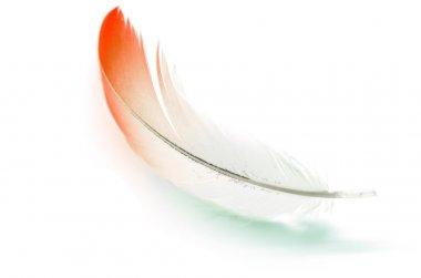 Flamigo feather isolated