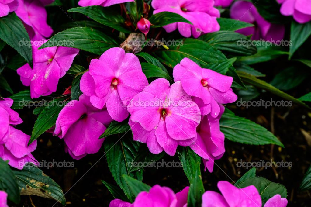 Tiny pink flowers stock photo holyhikaru 45487111 tiny pink flowers stock photo mightylinksfo