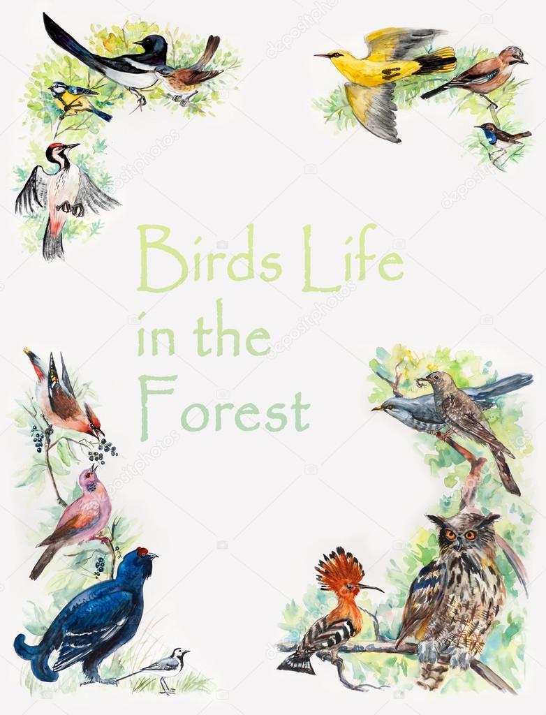 Vögel-Rahmen. Tierwelt-frame — Stockfoto © budogosh #43595493