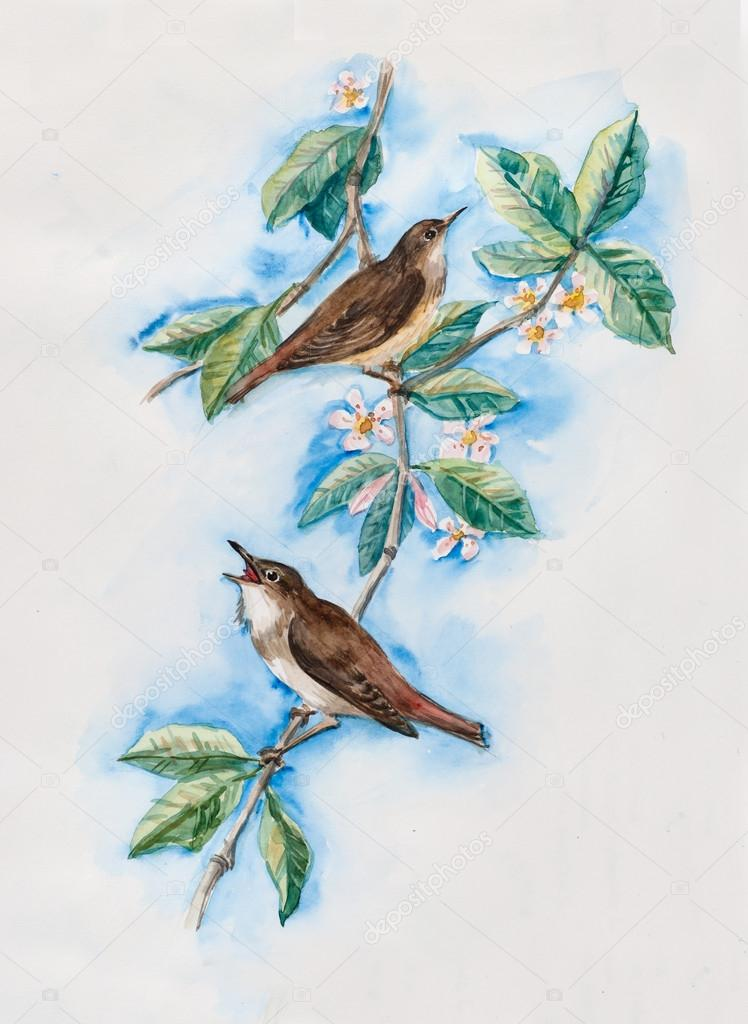 Nightingales on a branch with flowers.