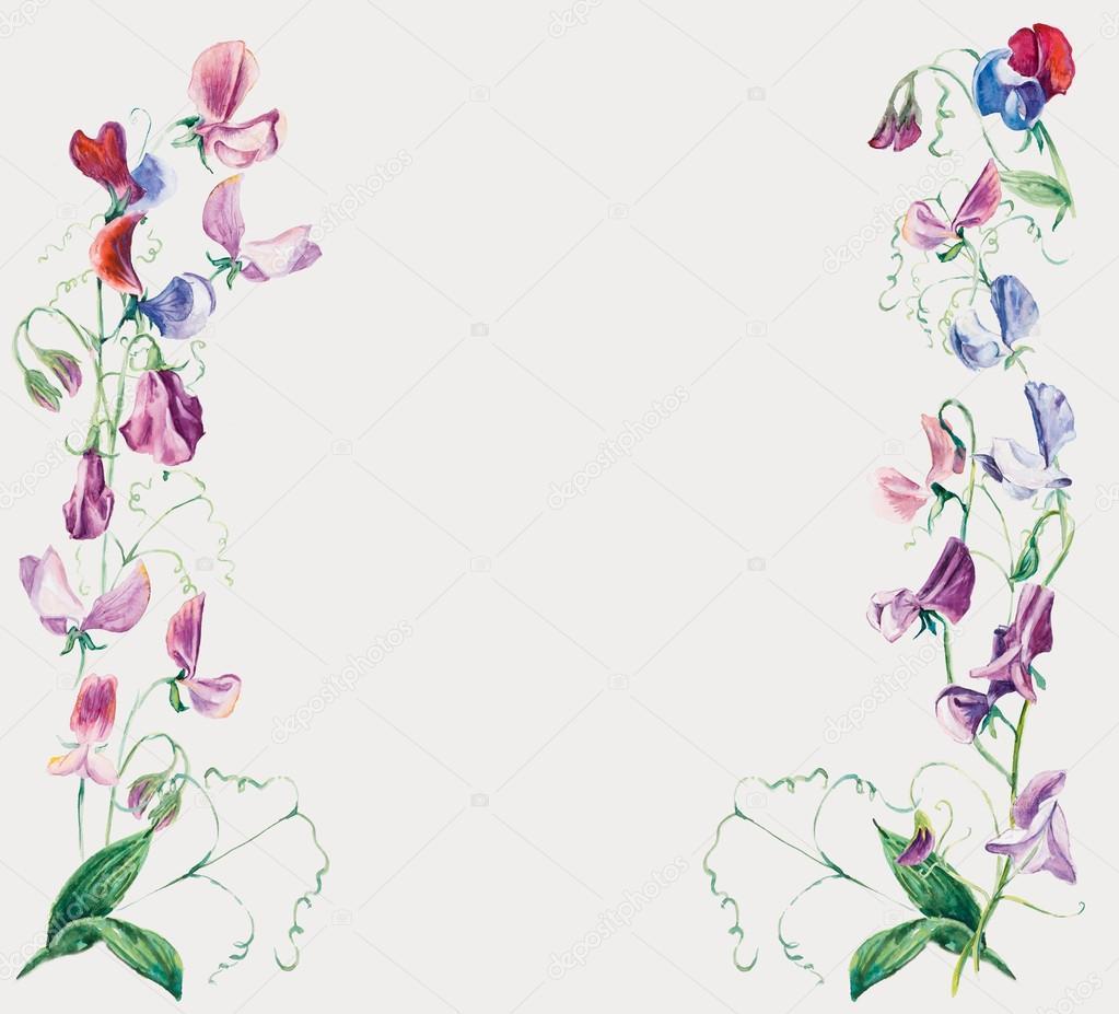 sweet pea bloemen. frame van bloemen — Stockfoto © budogosh #46149543