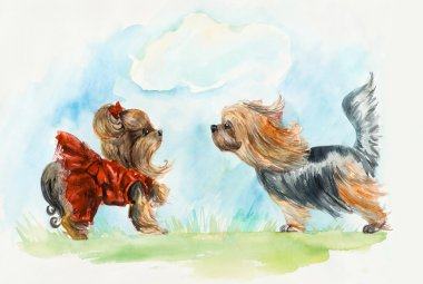 Yorkshire terrier. Dogs meeting.