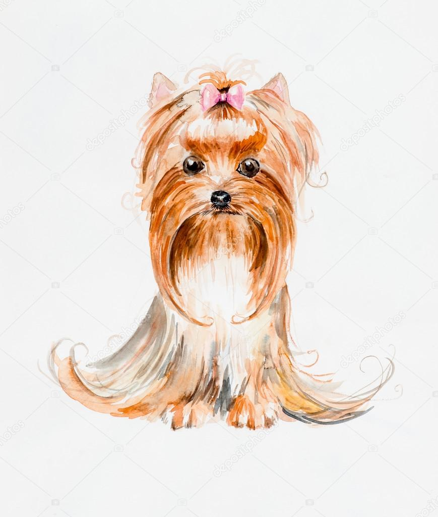 Dog with a hood. Yorkshire terrier. Pink bow and hair dress.