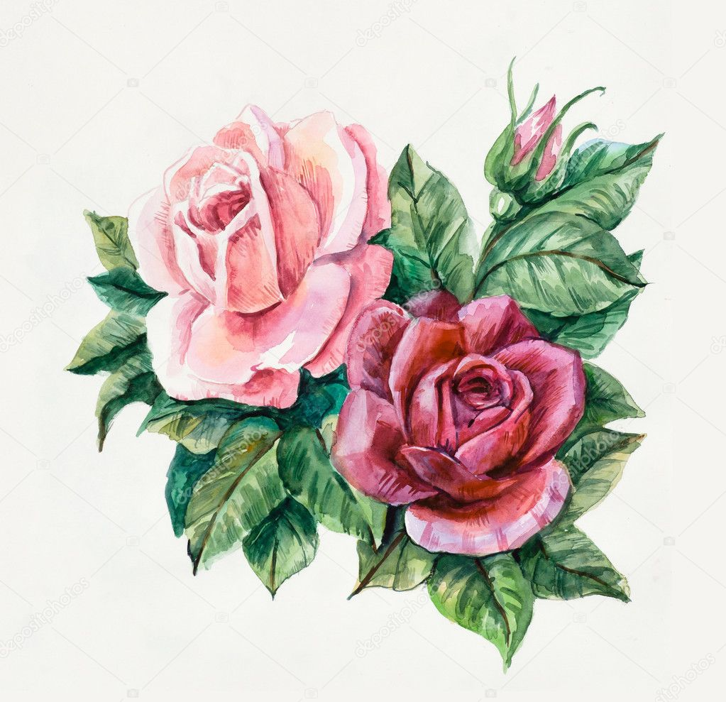 Two pink roses. Pattern from rose.