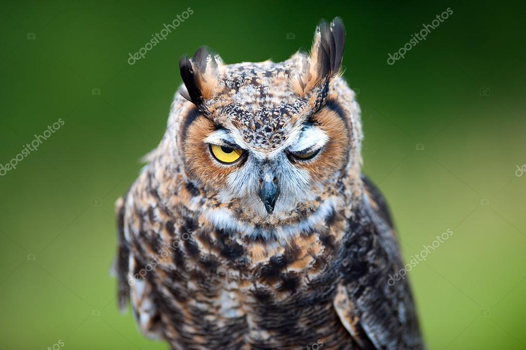 cute owl pictures