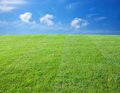 Fotografie zelený trávník