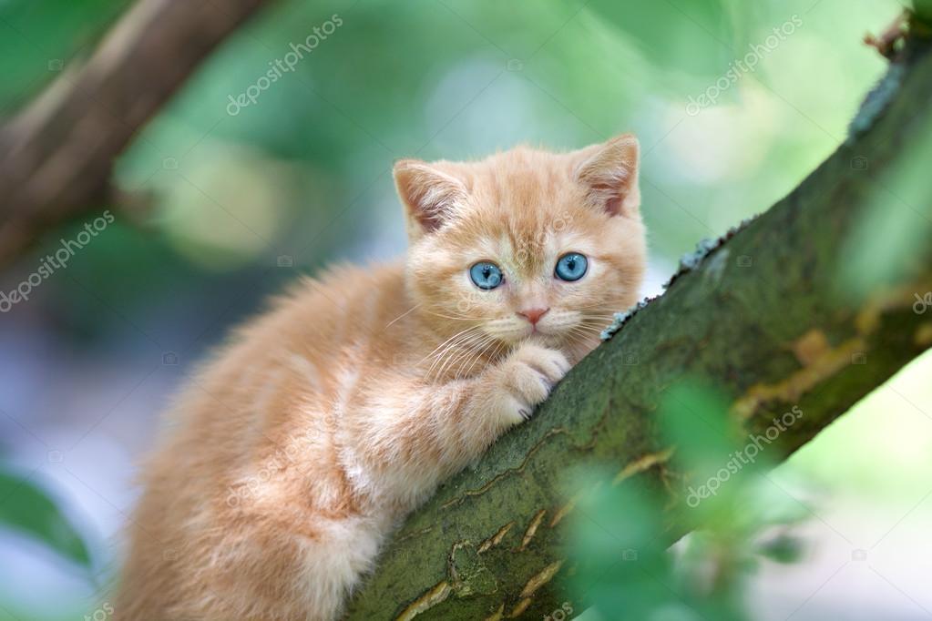 Kitten sneaking on the tree