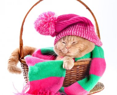 Cat wearing a hat and a scarf