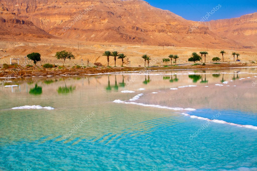 Dead Sea seashore with palm trees