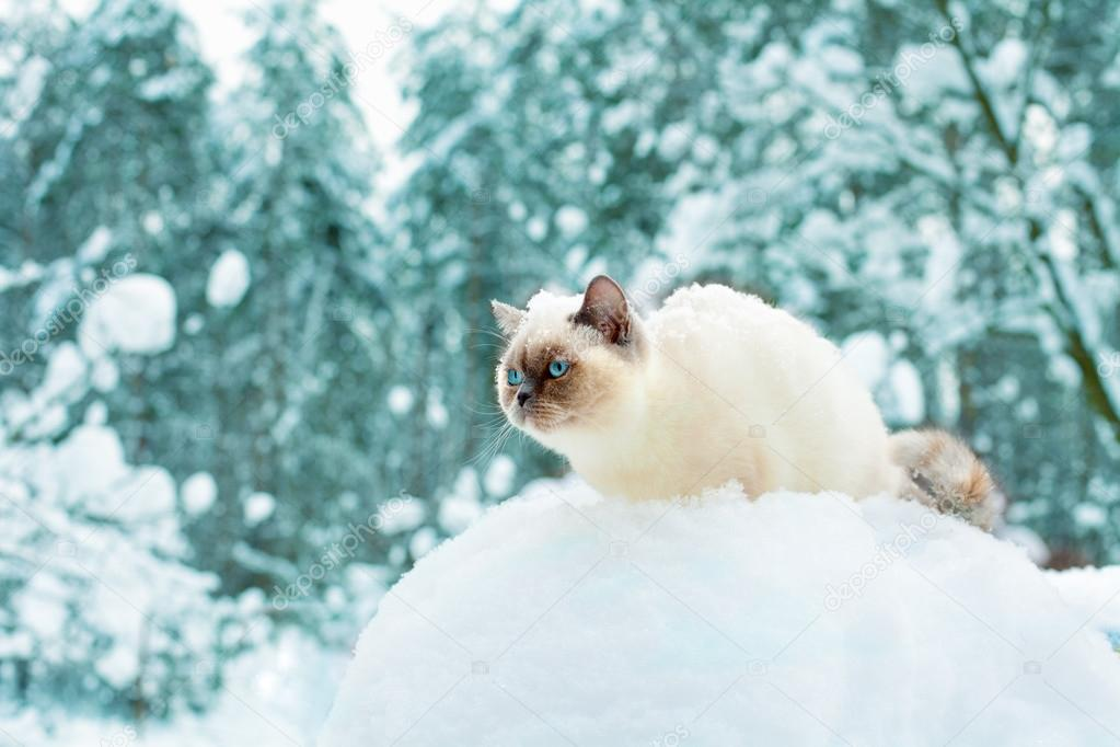 Cat sitting in snow in the forest