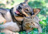 Fotografie pes a kočka spolu hrají venkovní