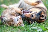 Fotografie pes a kočka hraje společně outdoor.lying na zadní straně dohromady