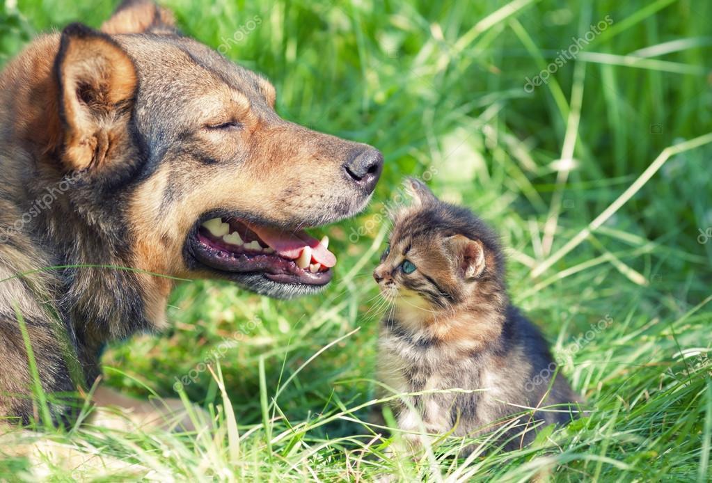 Собака и котенок в траве — Стоковое фото © vvvita #44805843