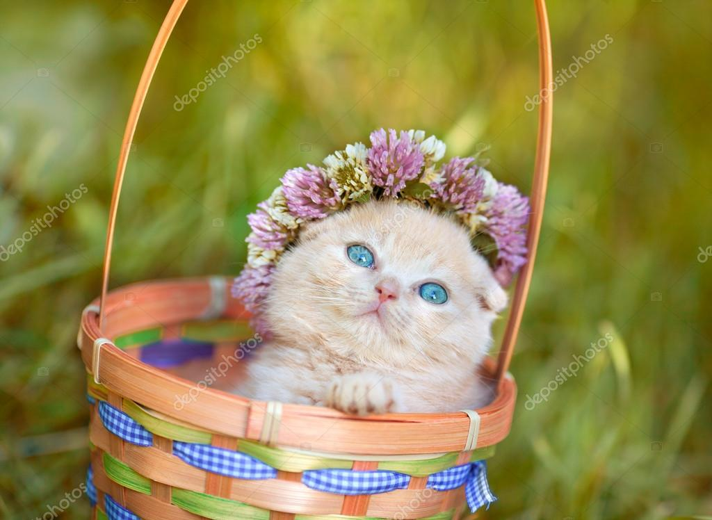 Kitten crowned with a chaplet of clover