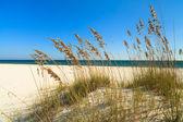 Fotografie nádherná pláž