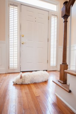 Dog waiting at the door