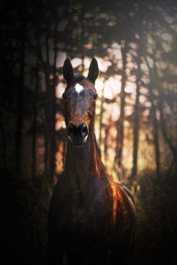 beatiful horse sunset