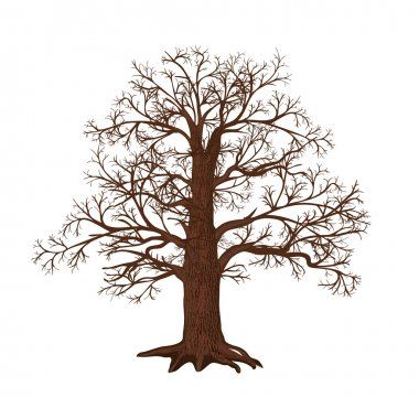 oak without leaves on a white background