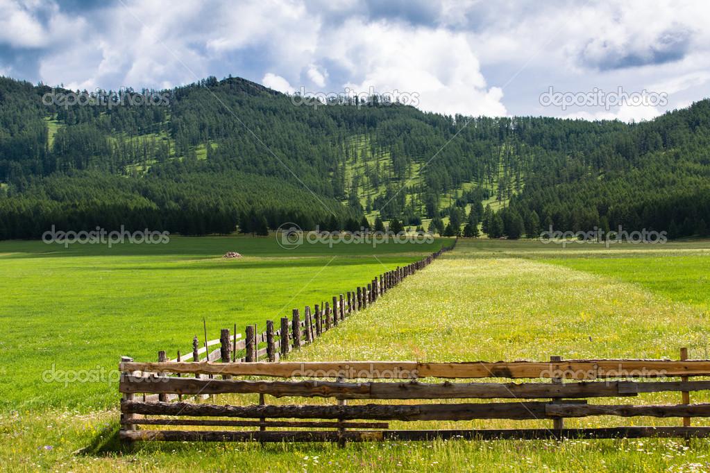 pasto con hierba verde y amarilla, separada por una valla — Fotos de ...