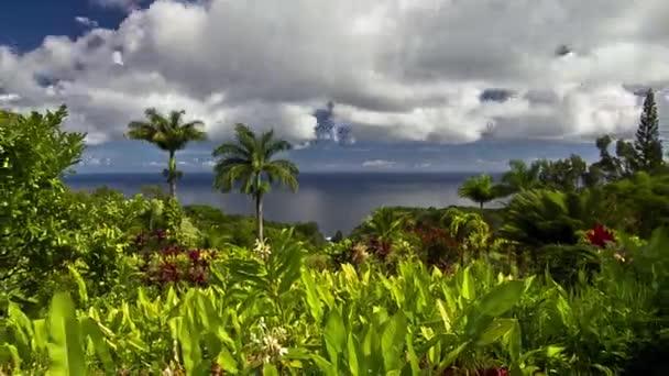 Garden Of Eden, Timelapse, Maui, Hawaii, USA — Stock Video © IEDN ...