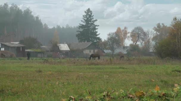 poblíž vesnice domy pasoucí koně