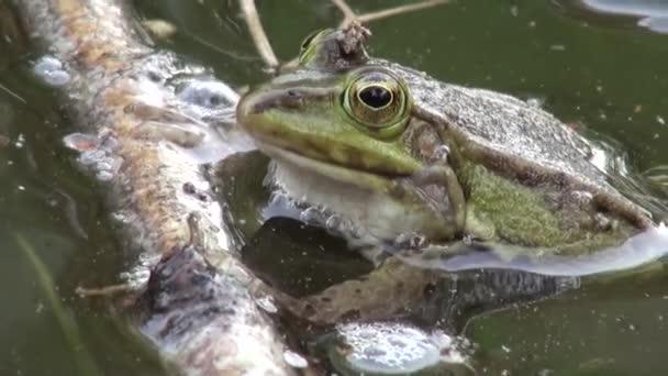 Frosch Paarung Zeitraum Reptilien Wasser Tiere