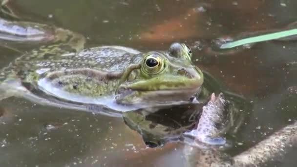 Frosch Paarungszeit Reptilien Wassertiere