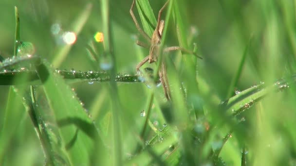 piccolo ragno seduto su un volantino e crogiolarsi in insetto animali sole