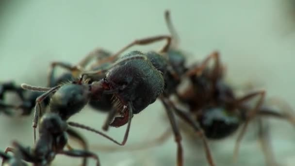 Insects macro ants