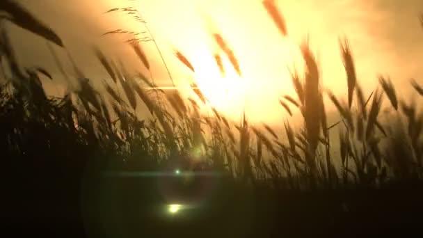 západ slunce trávou v oboru
