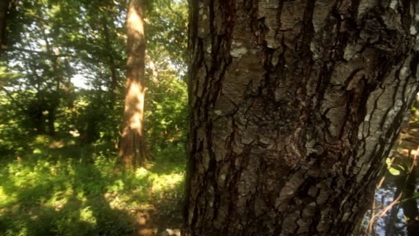 přirozené stromy lesa