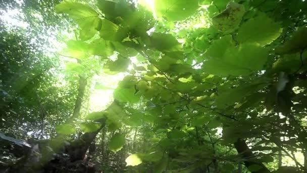 krásné přírodní Les