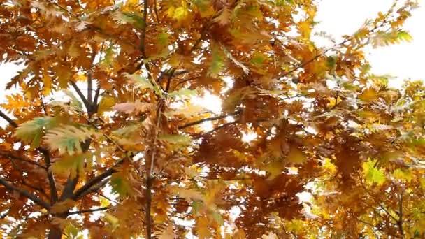 podzimní listí lesní