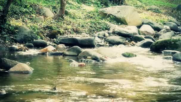 patak, természet, fákkal körülvett