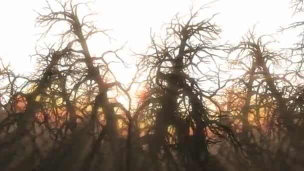 Sunbeams sunset tree