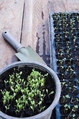 Germination germination tray
