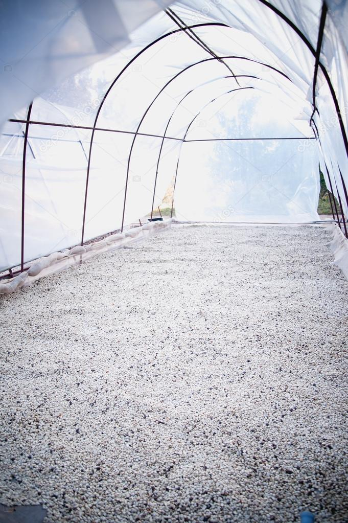 process of drying coffee beans in clean room