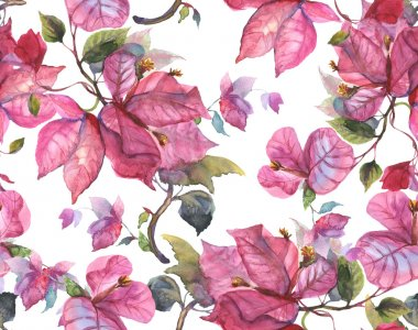 Bougainvillea Seamless Pattern, hand draw stock vector