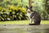 Fotografie Katze sitzt im Park