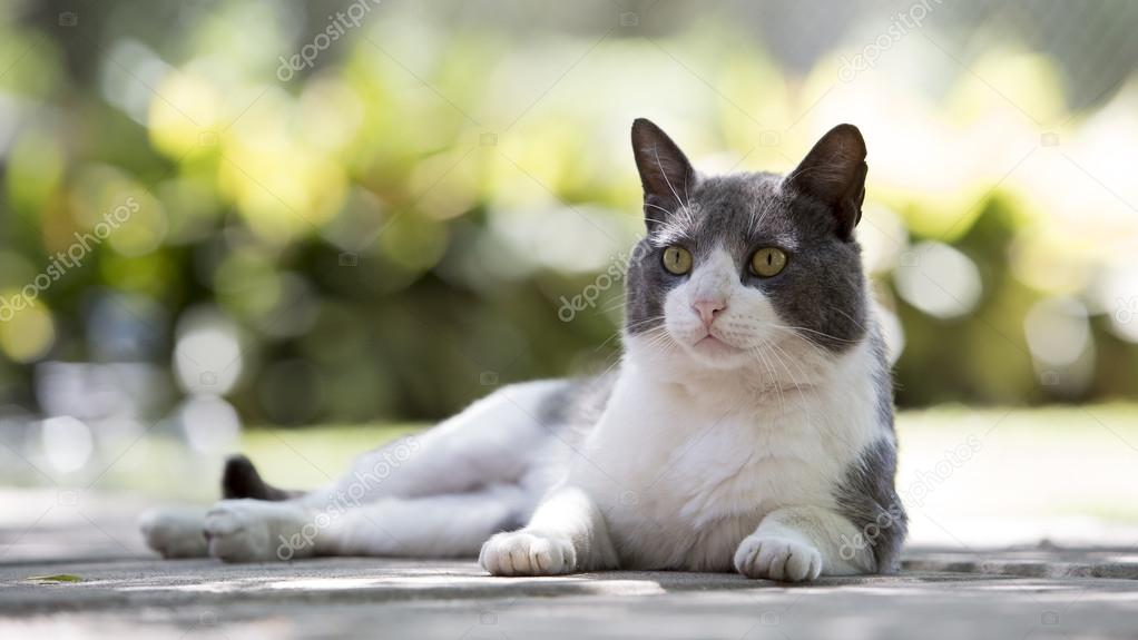 Cat lying in the park