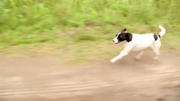 Running small dog