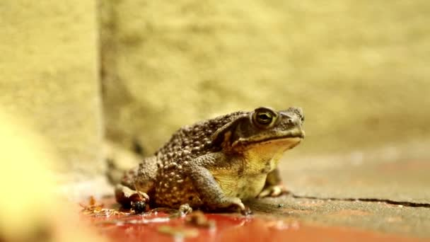 mokrý žáby