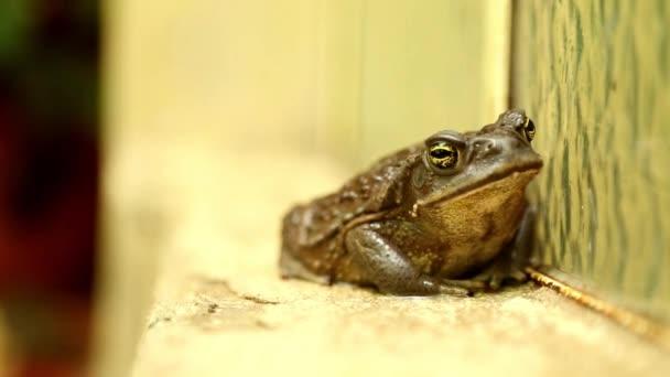 nasse Frosch