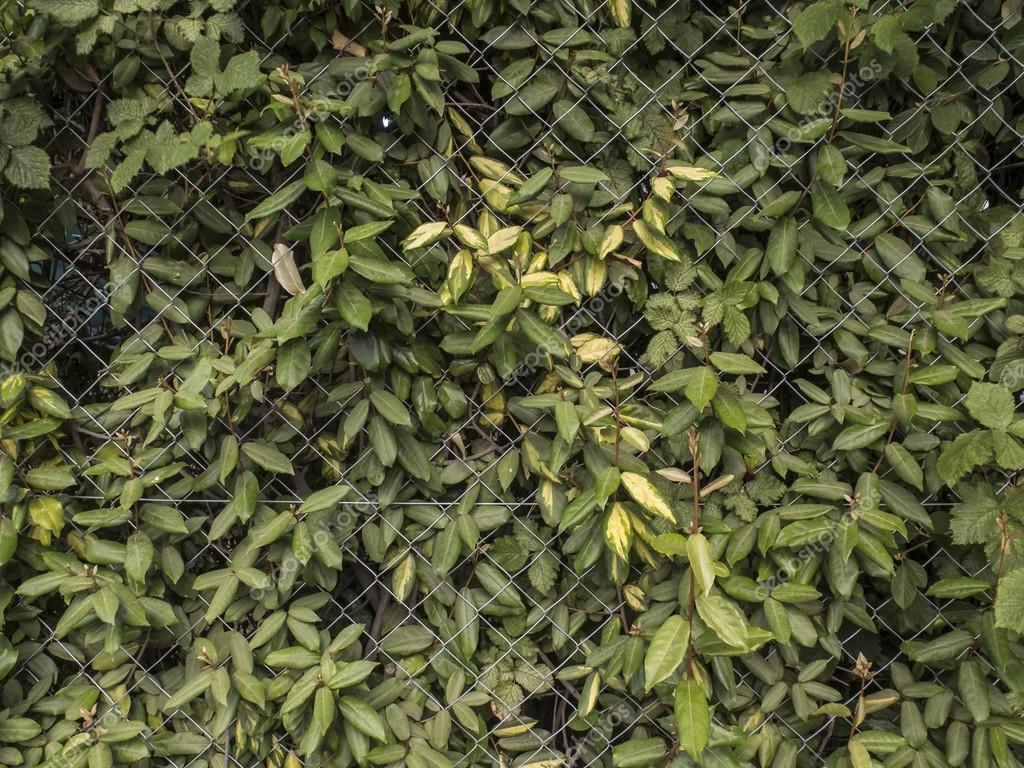 Valla Metalica Con Arbustos Foto De Stock C Simonlaprida 39212623 - Arbustos-para-vallas