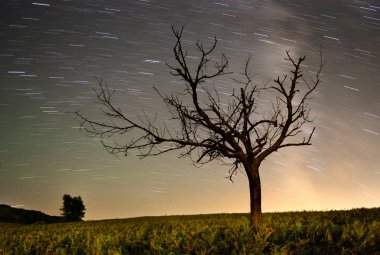 Star trails in the night in summer with tree as foreground.