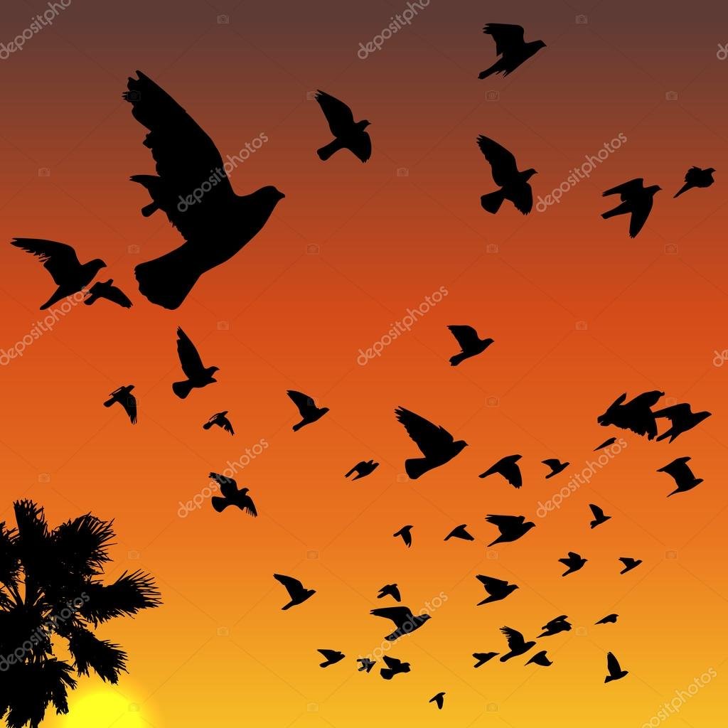 Sunset birds silhouettes