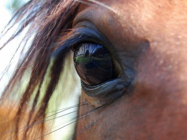 Horse Beauty in The eye