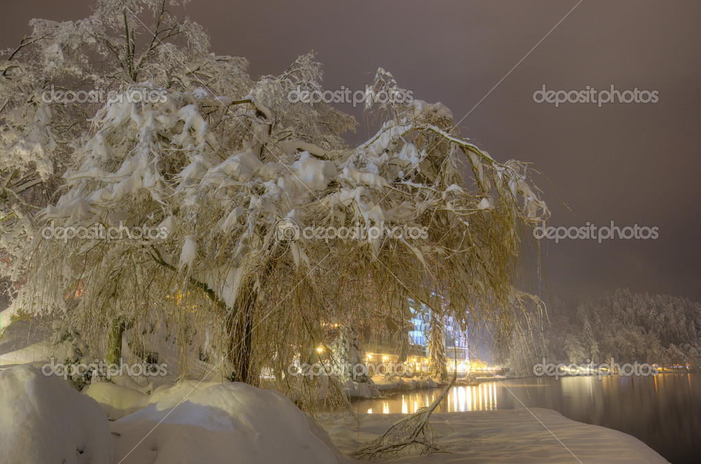 Snowbound Tree On The Bank Of Lake Bled In Winter Snowy